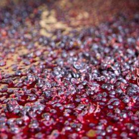 Fermenting Wine Grapes