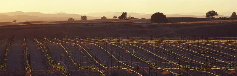 wine_vineyards