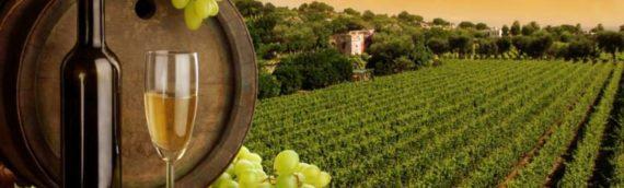 Wine Enology Analysis
