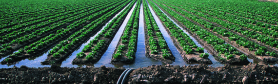 Irrigation Distribution Uniformity: Helping Growers Conserve Water